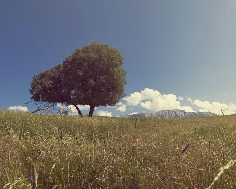 the hills tree